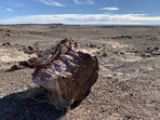 Petrified wood at Petrified Forest National Park